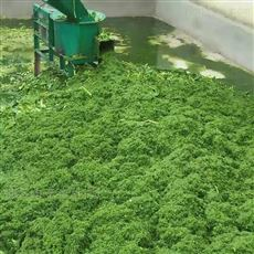 SL DJJ水产养殖业专用饲料打浆机高喷揉丝机