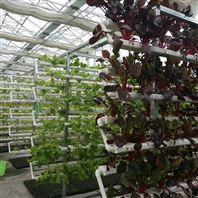 温室无土栽培 pvc管道立体栽培架
