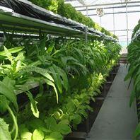 温室叶菜 立体栽培 育苗种植 水培层架