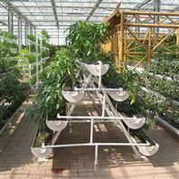 A字型 立体栽培 草莓种植槽 基质栽培架