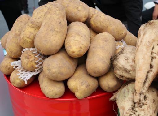 甘肃省下达600万资金用于马铃薯晚疫病防控