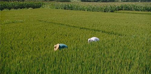 湖北省2020年将建设30处绿色农田创新建设示范区