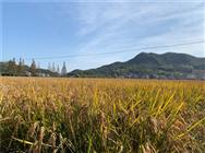 今年多个国家面临粮食危机,我国的粮食安全问题怎么样?