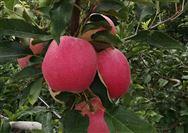 8月份农业农村经济运行稳定向好
