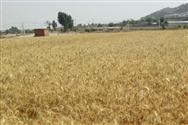 关于印发《行动起来,争取秋粮颗粒归仓活动倡议书》的通知