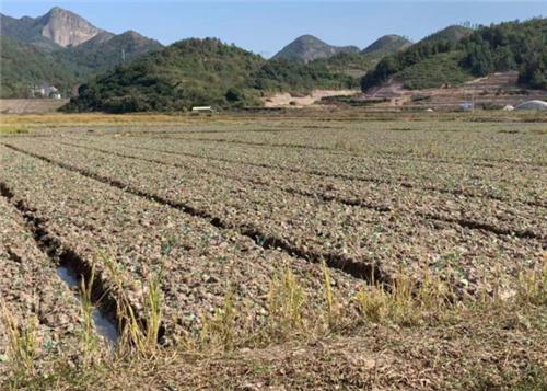 全国耕地土壤墒情总体适宜 有利于秋收秋种 局部耕地土壤偏湿 需及时排湿散墒